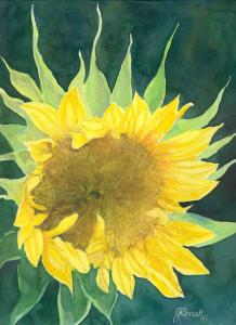 Unique Watercolor of Opening Sunflower